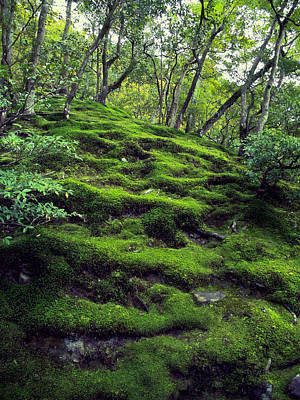 Dappled Light Photograph - Moss Forest In Kyoto Japan by Daniel Hagerman