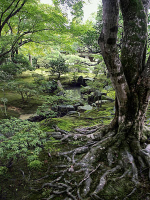 Dappled Light Photograph - Moss Forest Japan by Daniel Hagerman