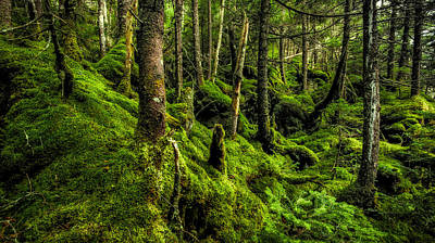 Photograph - Moss Garden by Robert Clifford