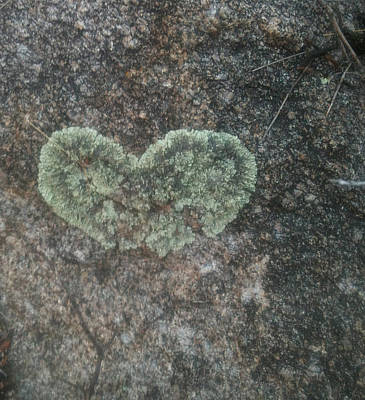 Photograph - Moss Heart  by Claudia Goodell