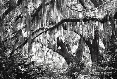 Photograph - Moss In A Magical Land by IK Hadinger