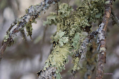 Photograph - Moss In The Forest by Joanne Smoley