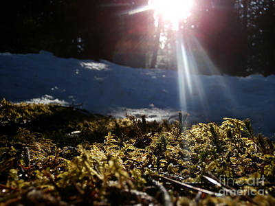Moss In The Sunlight Art Print by Steven Valkenberg