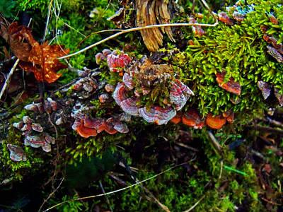 Moss Mushrooms And Knocks Art Print