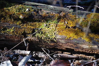 Photograph - Moss On A Log by Mark McReynolds