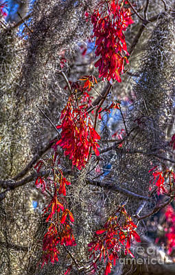 Red Leaves Photograph - Moss On The Red Tree by Marvin Spates