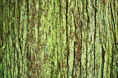 Moss On Tree Bark Art Print