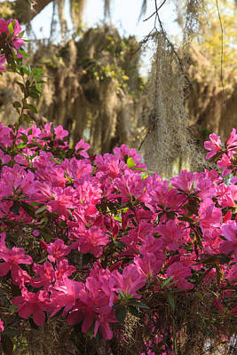 Print featuring the photograph Moss Over Azaleas by Patricia Schaefer