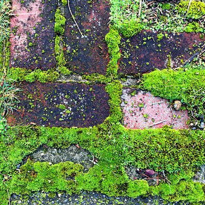 Photograph - Moss Texture Abstract by Nancy Merkle