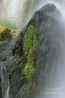 Photograph - Moss Under Spray by Adam Jewell