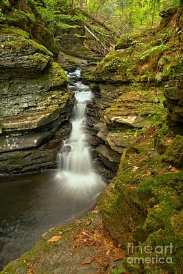 Photograph - Mossy Adams Creek Falls by Adam Jewell