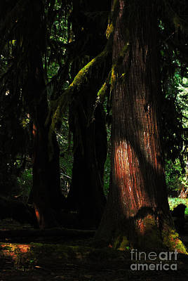 Photograph - Mossy Arms In Spooky Forest. Olympic National Park by Connie Fox