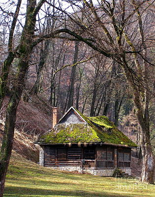 Photograph - Mossy Cabin by Tamyra Crossley