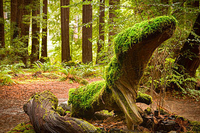 Photograph - Mossy Creature by Bryant Coffey