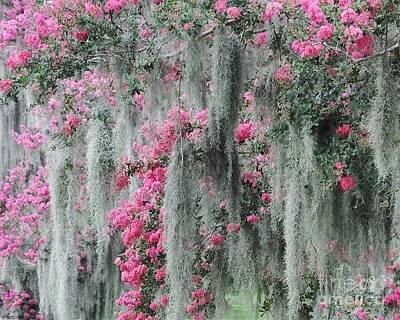 Photograph - Mossy Crepe Myrtle by Lizi Beard-Ward