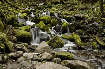 Olympic National Park Photograph - Mossy Falls by Heather Applegate