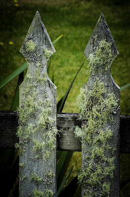 Photograph - Mossy Fence by Craig Perry-Ollila