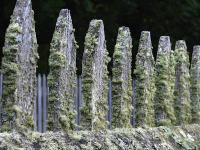 Mossy Fences Art Print by Tina Pitsiavas