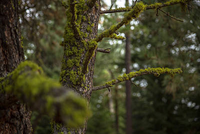 Photograph - Mossy Forest II by Ryan Heffron