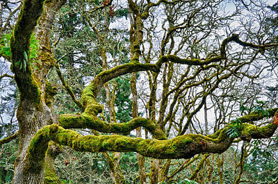 Photograph - Mossy Green by Kevin Munro