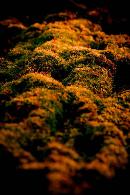 Mossy Hills Art Print by Loriental Photography