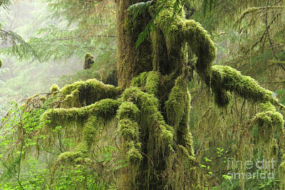 Photograph - Mossy Limbs by Frank Townsley