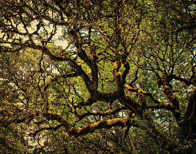Photograph - Mossy Oak In Golden Sunlight by Julie Magers Soulen