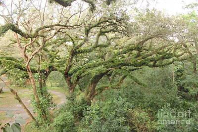 Mossy Oak Art Print by Joseph Williams