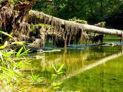 Photograph - Mossy Oak by Lisa Wooten