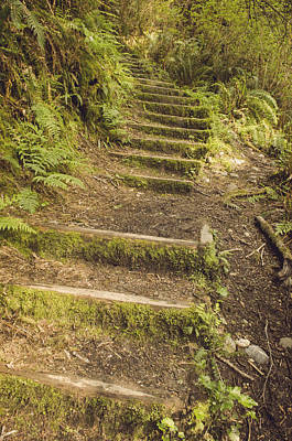 Olympic National Park Photograph - Mossy Path by Heather Applegate