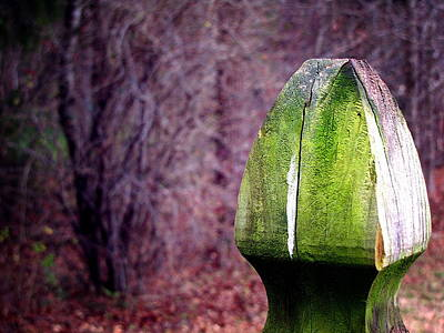 Photograph - Mossy Post by Greg Simmons