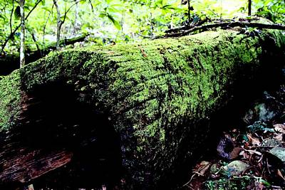 Photograph - Mossy Rainforest Log by David Rich