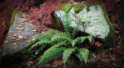 Photograph - Mossy Rock And Fern by Patricia Strand