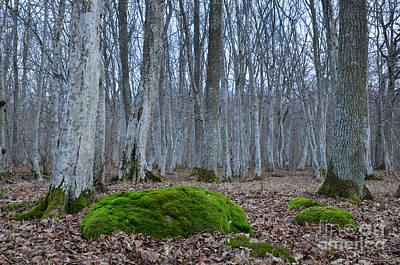 Photograph - Mossy Rock In Mystic Forest by Kennerth and Birgitta Kullman