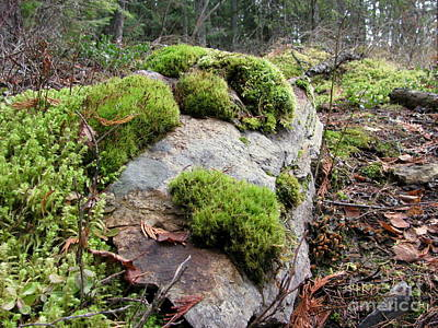 Photograph - Mossy Rock by Leone Lund