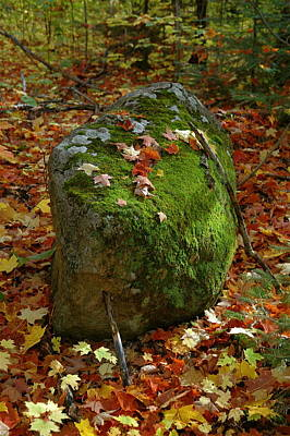 Mossy Rock Art Print by Sandra Updyke