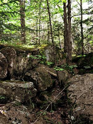 Photograph - Mossy Rocks In The Forest by Michelle Calkins