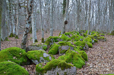 Photograph - Mossy Rocks by Kennerth and Birgitta Kullman