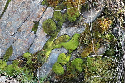 Photograph - Mossy Rocks by Leone Lund