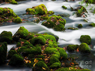 Mossy Spring Art Print by Shannon Beck-Coatney