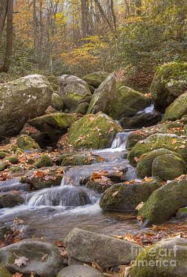 Photograph - Mossy Stream by Crystal Nederman