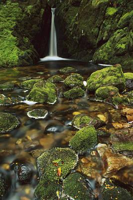 Mossy Stream Fiordland Np Art Print by Shaun Barnett