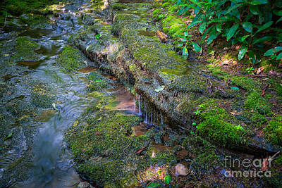 Rock Royalty - Mossy Trail 2  by Michael Ver Sprill