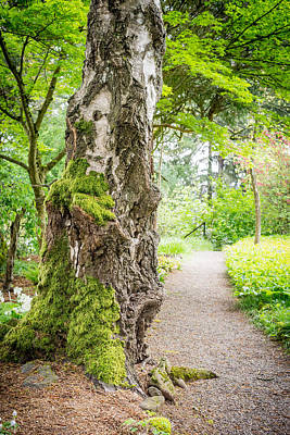 Photograph - Mossy Tree Along A Path by Priya Ghose