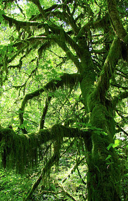 Photograph - Mossy Tree by Athena Mckinzie