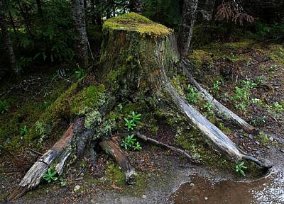 Photograph - Mossy Tree Stump by Amanda Holmes Tzafrir