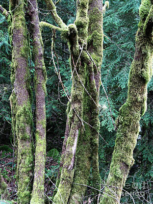 Art Print featuring the photograph Mossy Trees by Gerry Bates