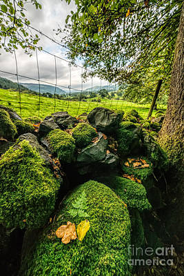 Rock Wall Photograph - Mossy Wall by Adrian Evans