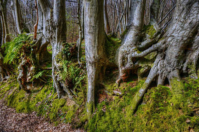 Photograph - Mossy Woodland  by Mick House