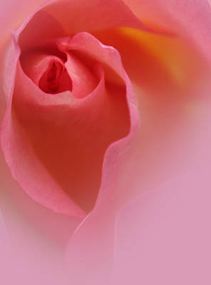 Pink Roses Photograph - Most Precious by The Art Of Marilyn Ridoutt-Greene